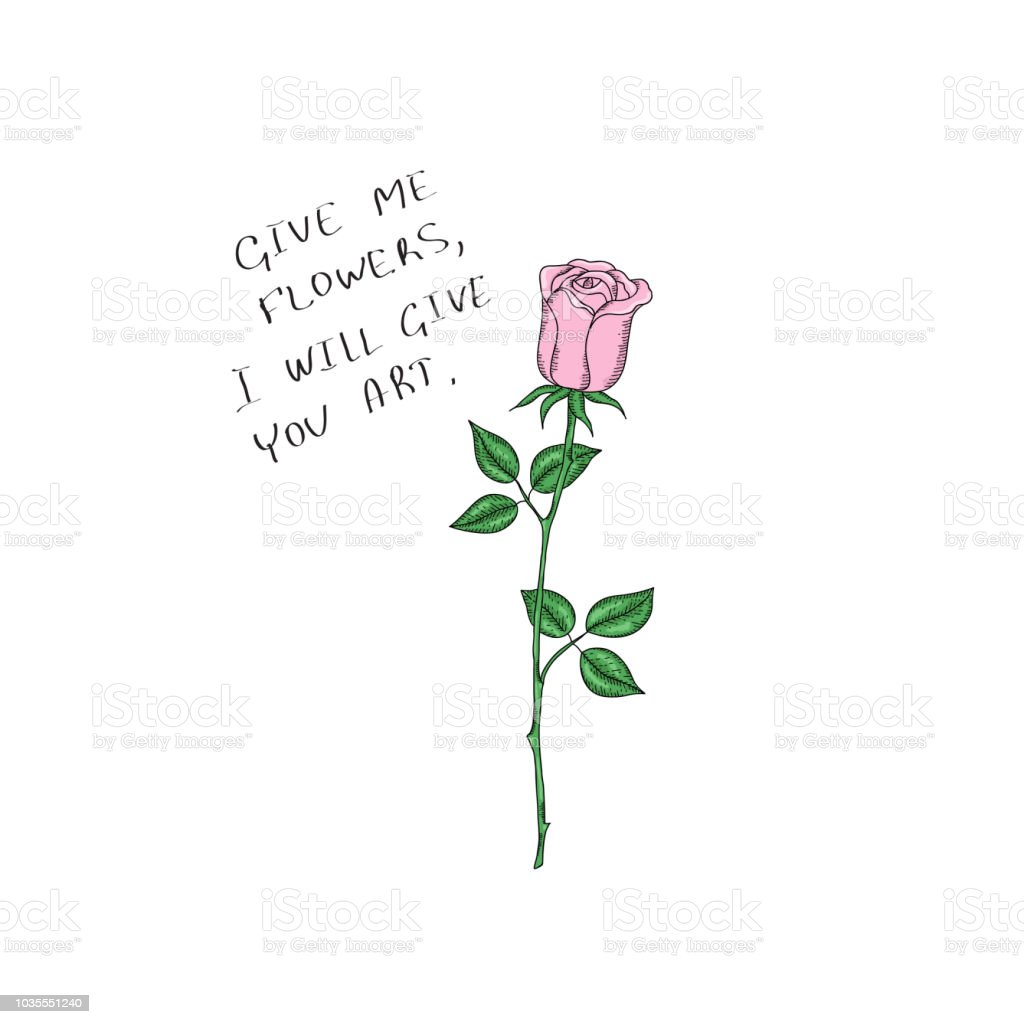 Flower Pink Rose With Stem On White Background Vector Design For