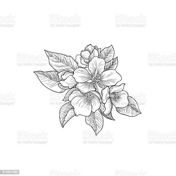 Flower rose bouquet engraving floral greeting card flourish border vector id615804982?b=1&k=6&m=615804982&s=612x612&h=6y0 ehbmpll2 bs6uaopwy6daazbcztiwgrxqrqzkgi=
