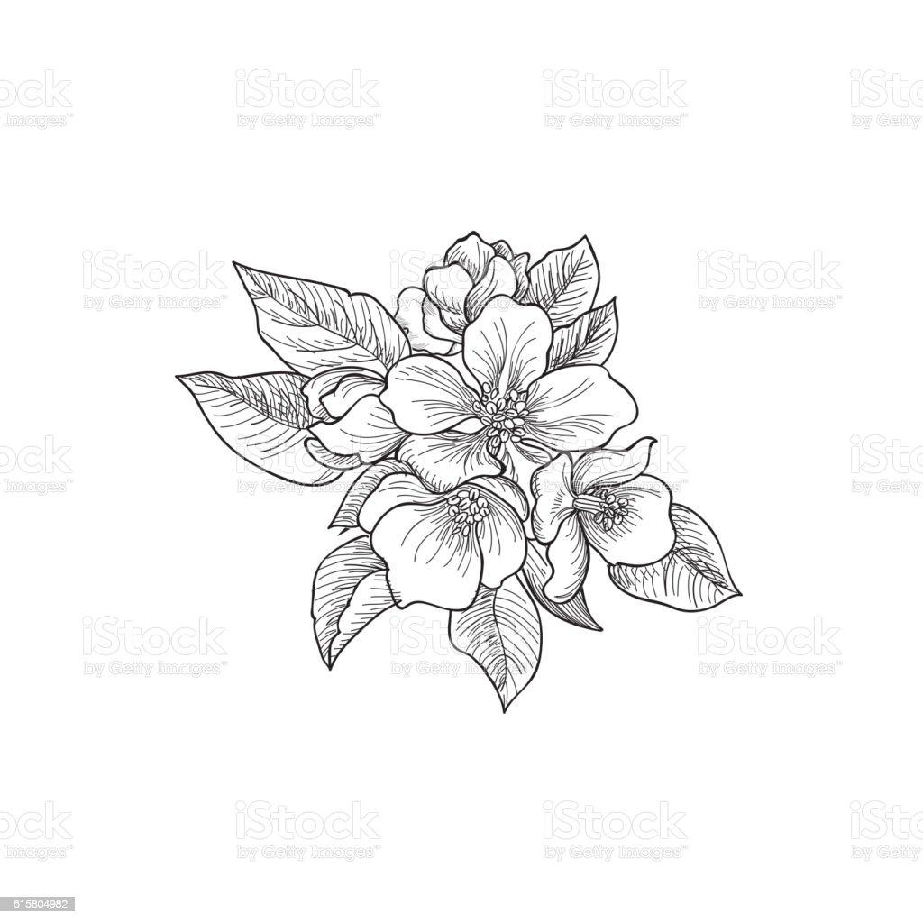Flower rose bouquet engraving. Floral Greeting Card. Flourish border background. vector art illustration