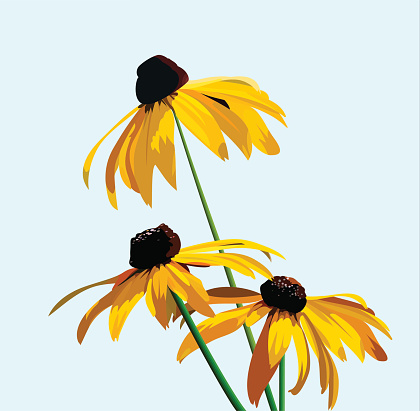 Rudbeckia flower on a background of blue sky. vector illustration for your design, cosmetic banners, brochures and promotional items