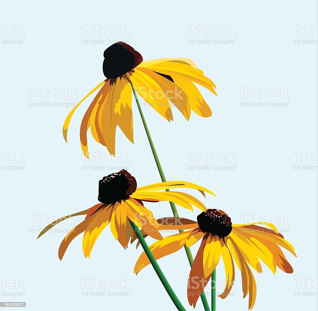 flower rudbeckia vector art illustration
