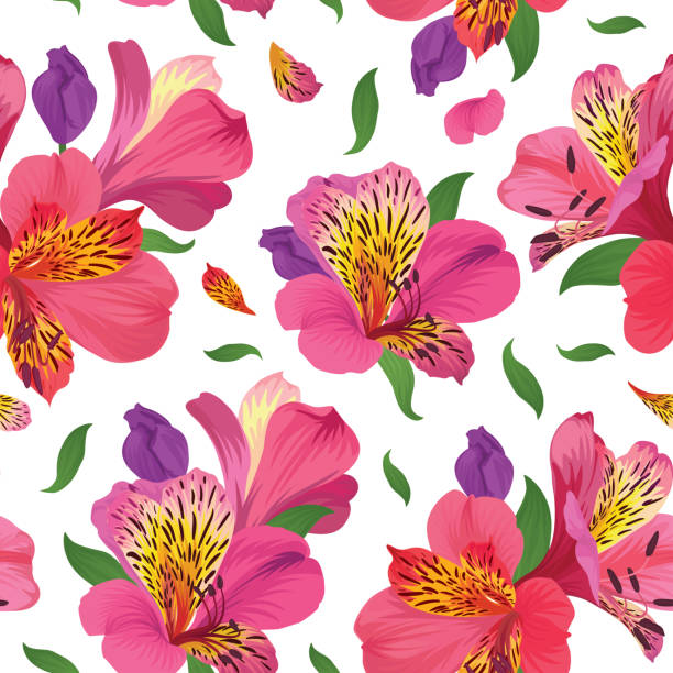 nahtlose blumenmuster mit schönen rosa alstroemeria lilie blumen auf weißem hintergrundvorlage. - inkalilie stock-grafiken, -clipart, -cartoons und -symbole