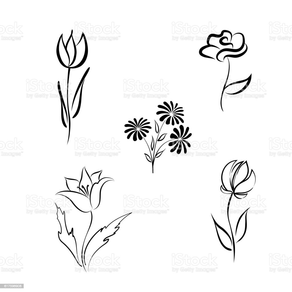 Line Drawing Flowers Blossom : Flower set single line hand drawn floral design elements