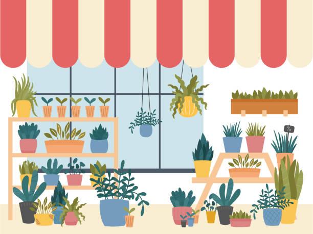 illustrations, cliparts, dessins animés et icônes de fleur boutique intérieur avec diverses plantes d'intérieur en pots, jardinières et boîtes, debout sur les étagères et les stands, avec fenêtre rayé hangar. modèle scandinave hygge mignon. illustration vectorielle, fond foncé - vitrine magasin
