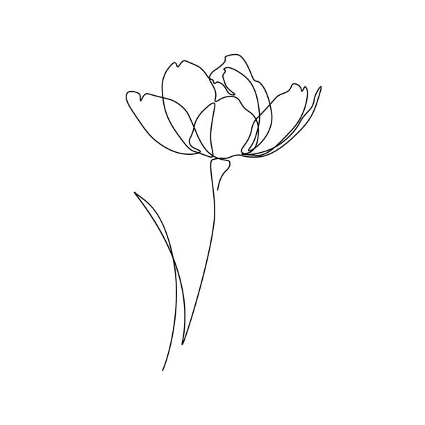 Flower Abstract flower in one line art drawing style. Black line sketch on white background. Vector illustration flowers stock illustrations