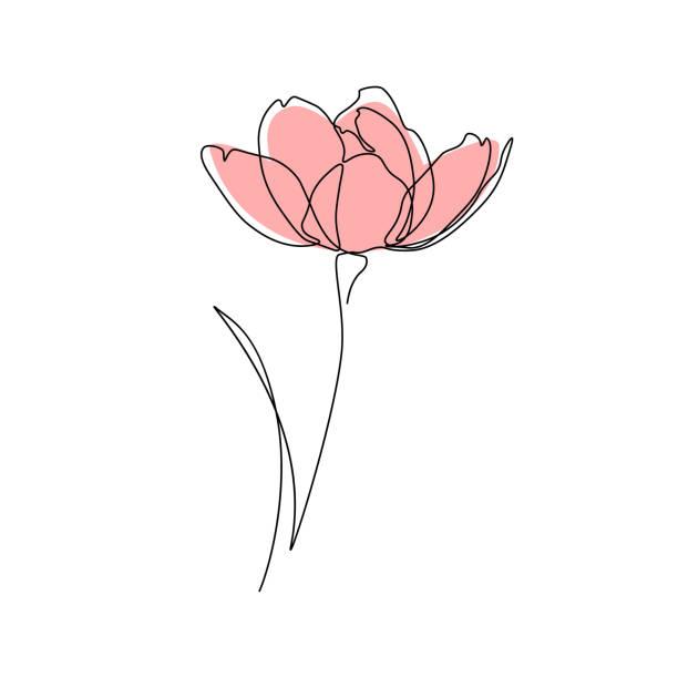 ilustrações, clipart, desenhos animados e ícones de flor - papoula planta