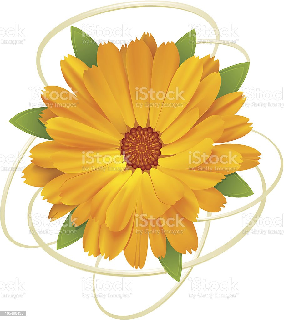 Flower royalty-free flower stock vector art & more images of beauty in nature