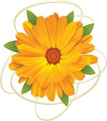 Vector illustration of yellow flower