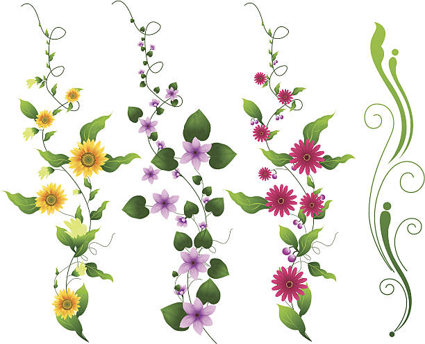flower vine - vine stock illustrations, clip art, cartoons, & icons