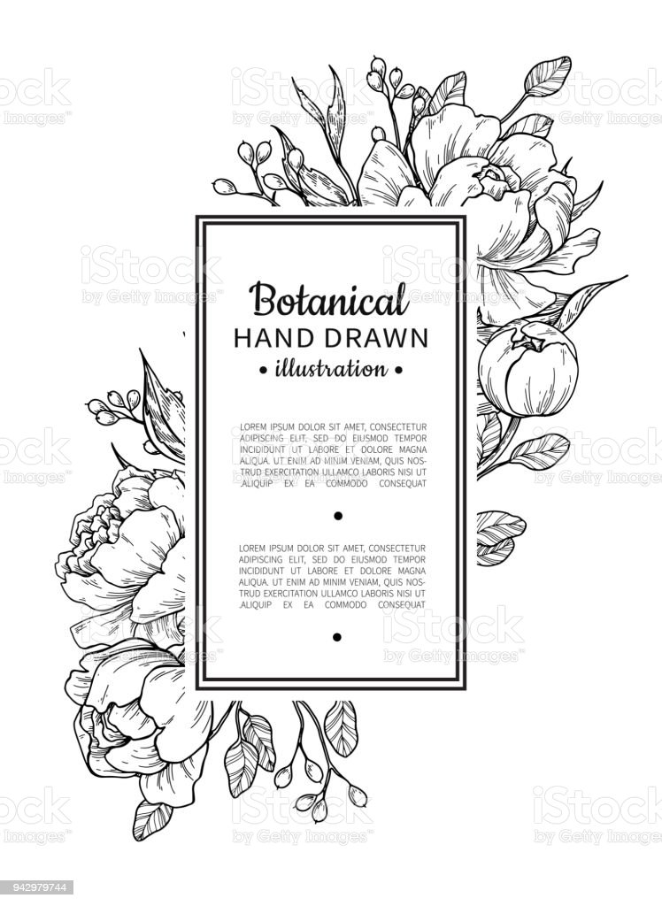 Flower Vintage Border Vector Peony And Roses Botanical Drawing