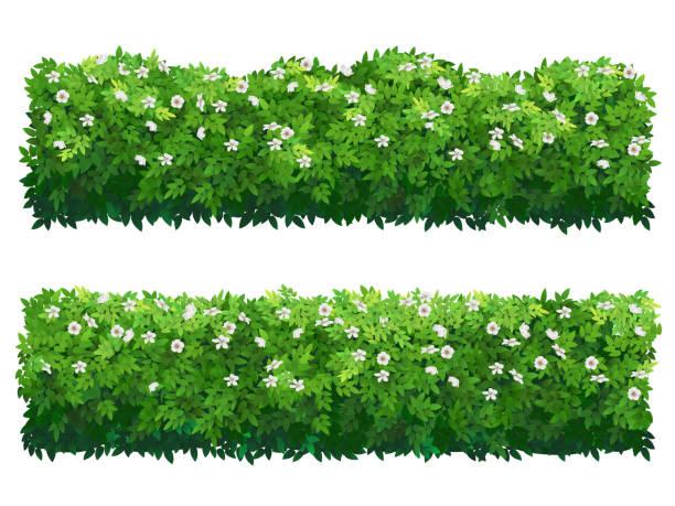 꽃 그린 부시 헤 지 - 관상용 식물 stock illustrations