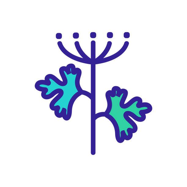 blühende koriander blütenstand symbol vektor umriss illustration - blütenstand stock-grafiken, -clipart, -cartoons und -symbole