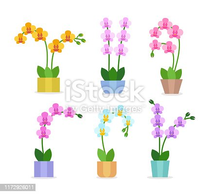 Flowering orchids. Flat icon set. Exotic tropical flowers in the pots. Blooming phalaenopsis houseplants isolated on white background. Home décor. Vector illustration