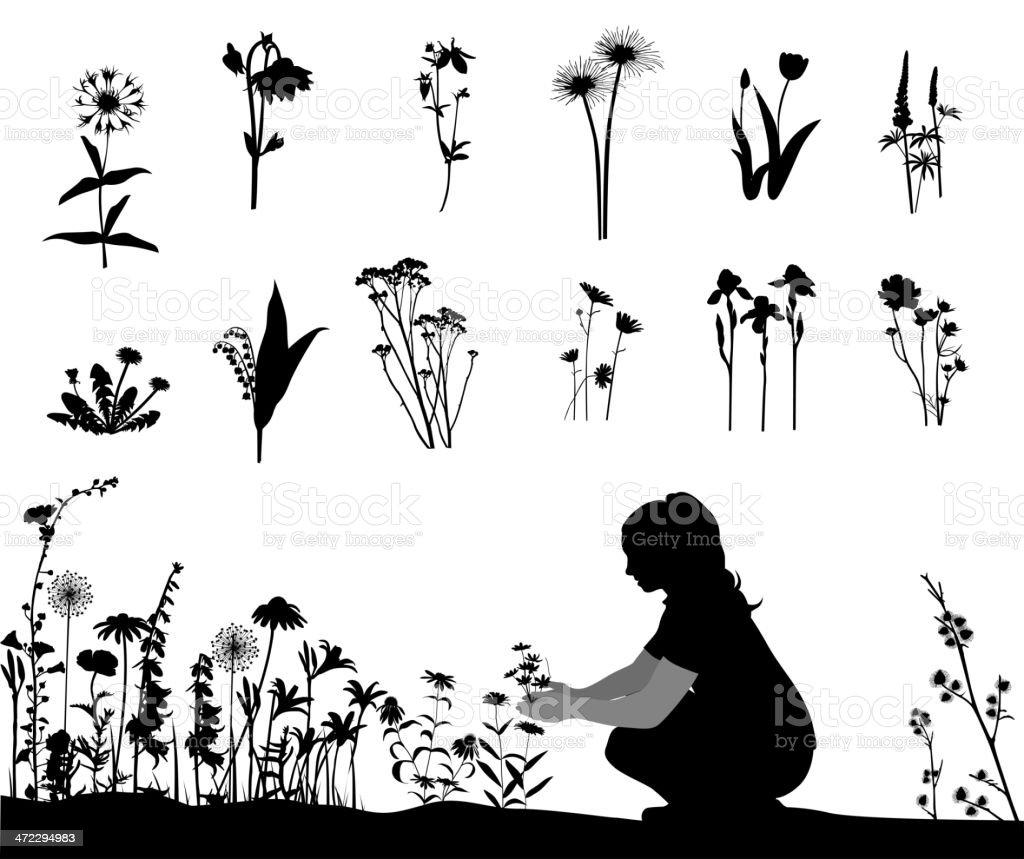 Flowering Vector Silhouette vector art illustration