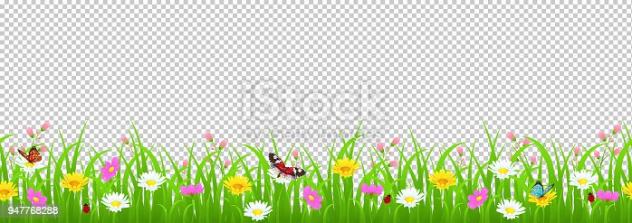 Flowers and grass border, yellow and white chamomile and delicate pink meadow flowers and green grass, butterflies and ladybug on transparent background, vector illustration, card element