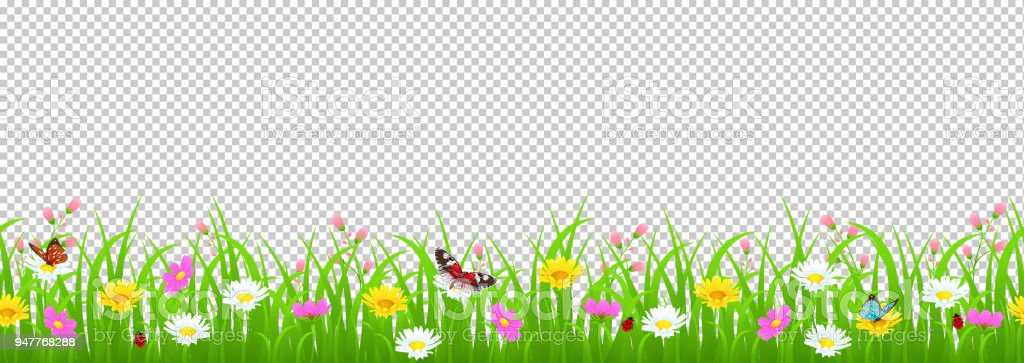 Flowers and grass border, yellow and white chamomile and delicate pink meadow flowers and green grass, butterflies and ladybug on transparent background, vector illustration, card decoration element vector art illustration