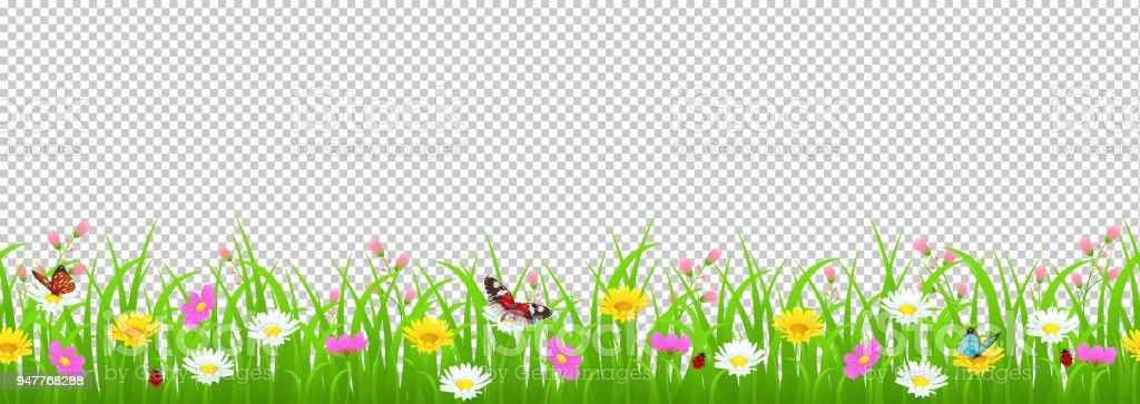 Çiçekler ve çim sınır, sarı ve beyaz papatya ve narin pembe çayır çiçek ve yeşil çimen, kelebekler ve uğur böceği şeffaf arka plan, illüstrasyon, kart dekorasyon öğesi vektör vektör sanat illüstrasyonu