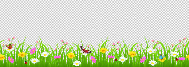 Flowers and grass border, yellow and white chamomile and delicate pink meadow flowers and green grass, butterflies and ladybug on transparent background, vector illustration, card decoration element Flowers and grass border, yellow and white chamomile and delicate pink meadow flowers and green grass, butterflies and ladybug on transparent background, vector illustration, card element spring stock illustrations