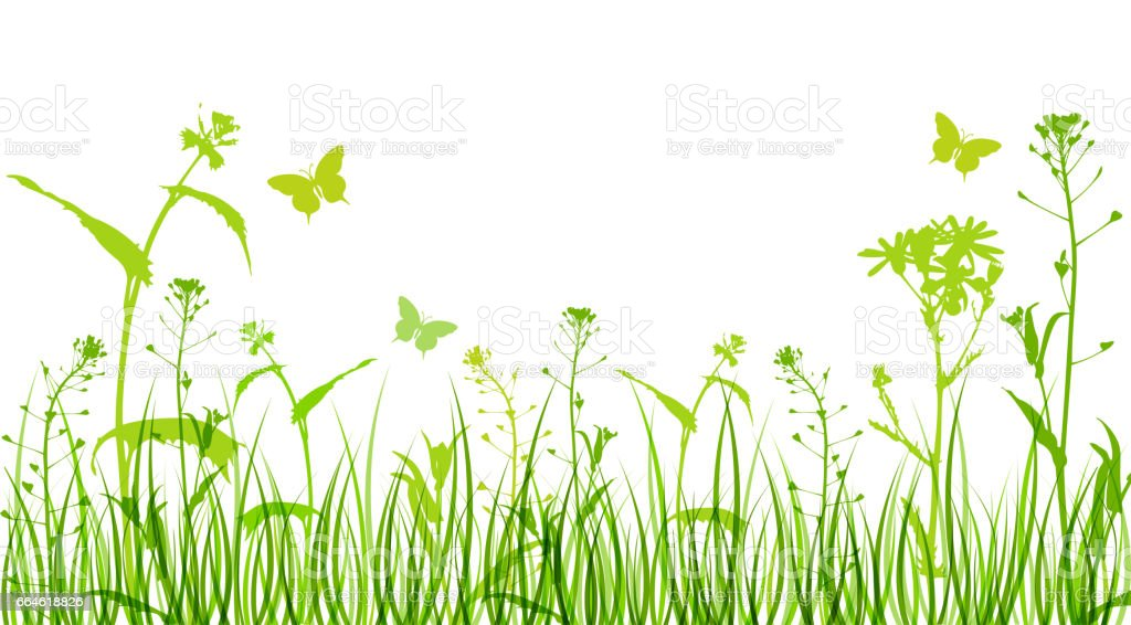 Bloemen en groen gras - Royalty-free Asteroideae vectorkunst
