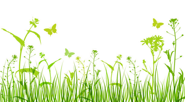 flowers and green grass - wildflowers stock illustrations, clip art, cartoons, & icons