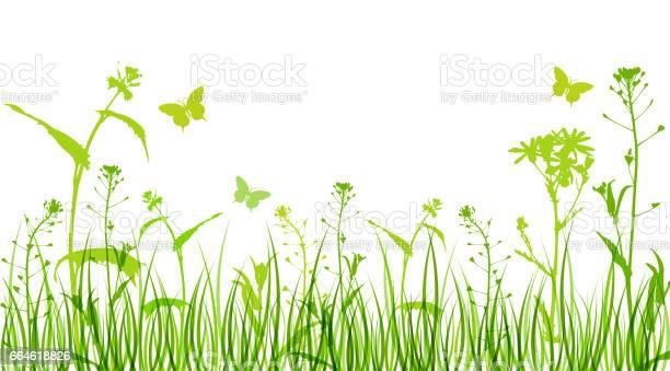 Bloemen En Groen Gras Stockvectorkunst en meer beelden van Asteroideae