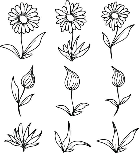 Flowers and Leaves Line Art vector art illustration