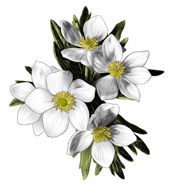 flowers anemone with leaves bouquet branch – artystyczna grafika wektorowa