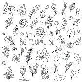 flowers, berries and leaves collection. Floral hand drawn vintage set. Sketch art illustration.