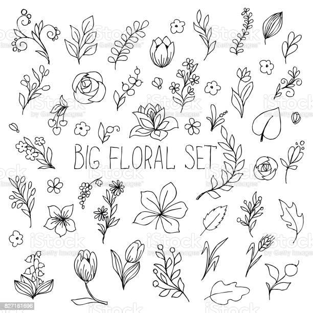 Flowers berries and leaves collection floral hand drawn vintage set vector id827161696?b=1&k=6&m=827161696&s=612x612&h=2twhtoyuvhivqcnnc rbdpp5w0mjvrkc2anzzvpd6te=