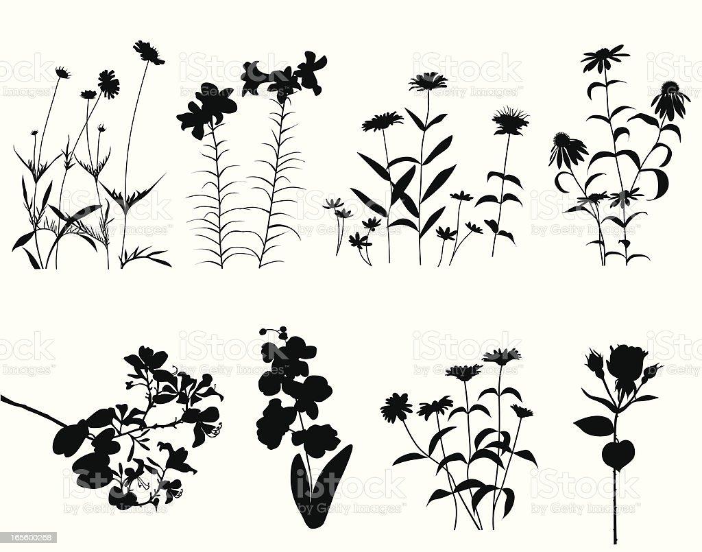 FlowersBlooming – Vektorgrafik