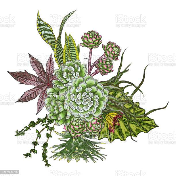 Flowers bouquet floral collection with various exotic jungle plants vector id997369792?b=1&k=6&m=997369792&s=612x612&h=y1ivjbhlp0sil0xbjo5akyievpvar9fakojwckrxyps=