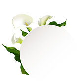 Flowers. Callas. Floral background. Green leaves. Border. Flower pattern. Bouquet.