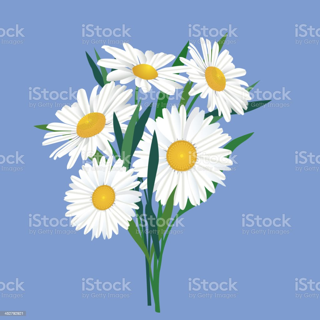 Flowers chamomile bouquet royalty-free flowers chamomile bouquet stock vector art & more images of aromatherapy
