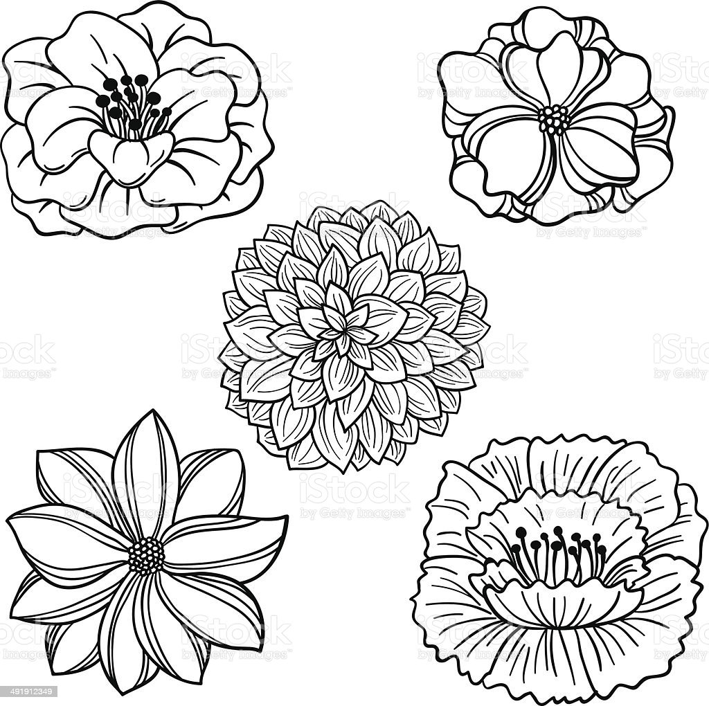 Flowers collection in black and white向量藝術插圖