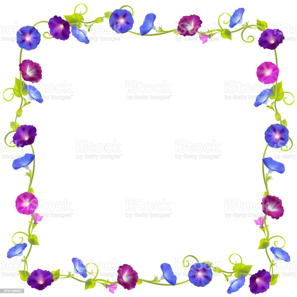 Flowers Convolvulus Floral Background Womens Day Card Frame Border ...