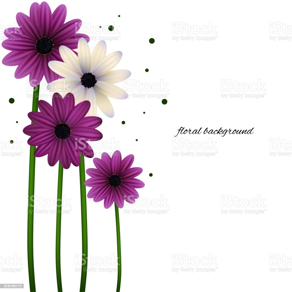 Flowers Daisies Floral Background Vector Background Frame Beautiful