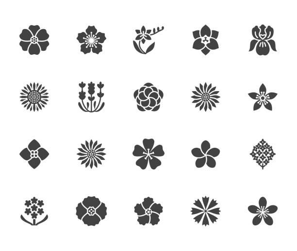 stockillustraties, clipart, cartoons en iconen met bloemen plat glyph pictogrammen. mooie tuinplanten - zonnebloem, papaver, cherry bloem met lavendel, gerbera, plumeria, hortensia bloesem. tekenen voor bloemen winkel. solide silhouet pixel perfect 64 x 64 - bloesem