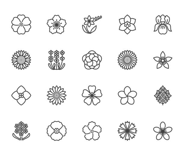 Flowers flat line icons. Beautiful garden plants - sunflower, poppy, cherry flower, lavender, gerbera, plumeria, hydrangea blossom. Thin signs for floral store. Pixel perfect 64x64 Editable Strokes Flowers flat line icons. Beautiful garden plants - sunflower, poppy, cherry flower, lavender, gerbera, plumeria, hydrangea blossom. Thin signs for floral store. Pixel perfect 64x64. Editable Strokes frangipani stock illustrations