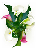 Flowers. Floral background. Callas. Green leaves. Flower pattern. Pink.  Roses. Bouquet.
