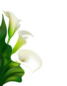 Flowers. Floral background. Callas. Green leaves. Flower pattern. White.  Frame. Bouquet.