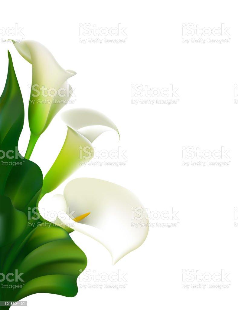 Fleurs. Floral fond. Callas. Des feuilles vertes. Motif de fleurs. Blanc.  Cadre. Bouquet. - Illustration vectorielle