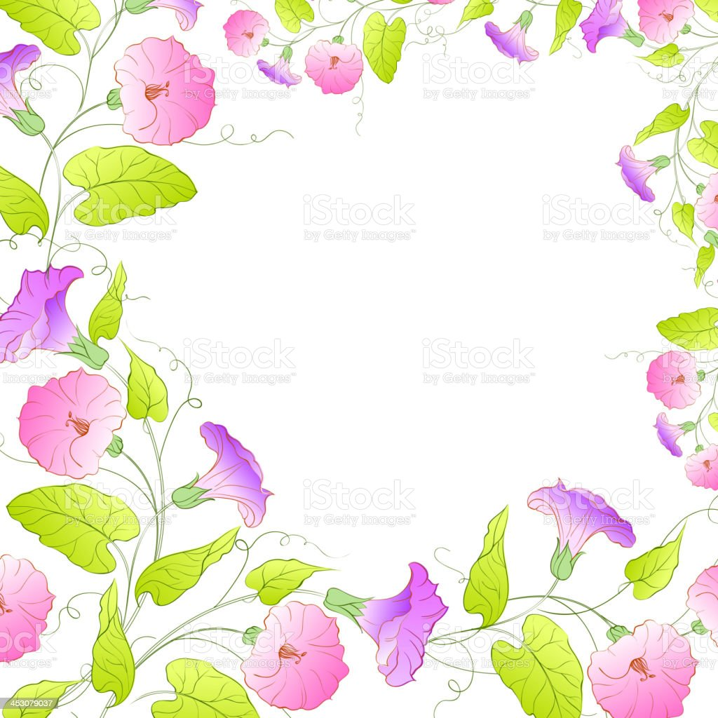 Flowers Frame of bindweed. royalty-free flowers frame of bindweed stock vector art & more images of backdrop