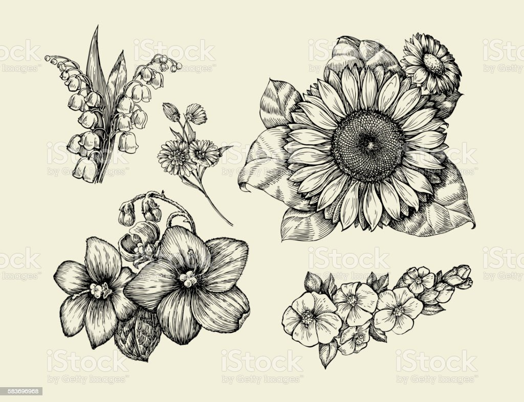 Flowers. Hand-drawn sketch flower, sunflower, white lily, violet...