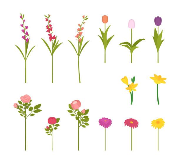 꽃 꽃 세트 - 관상용 식물 stock illustrations