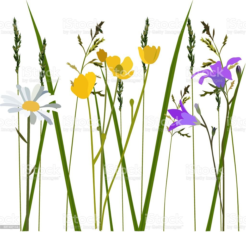 Flowers in meadow vector art illustration