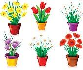 Various Flowers in Pots.