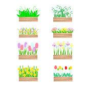 Flowers in wood box set. snowdrops, hyacinths, daffodils, tulips, crocuses, primroses, irises art design element stock vector illustration for web, for print