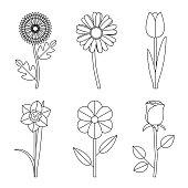 Flowers line drawings