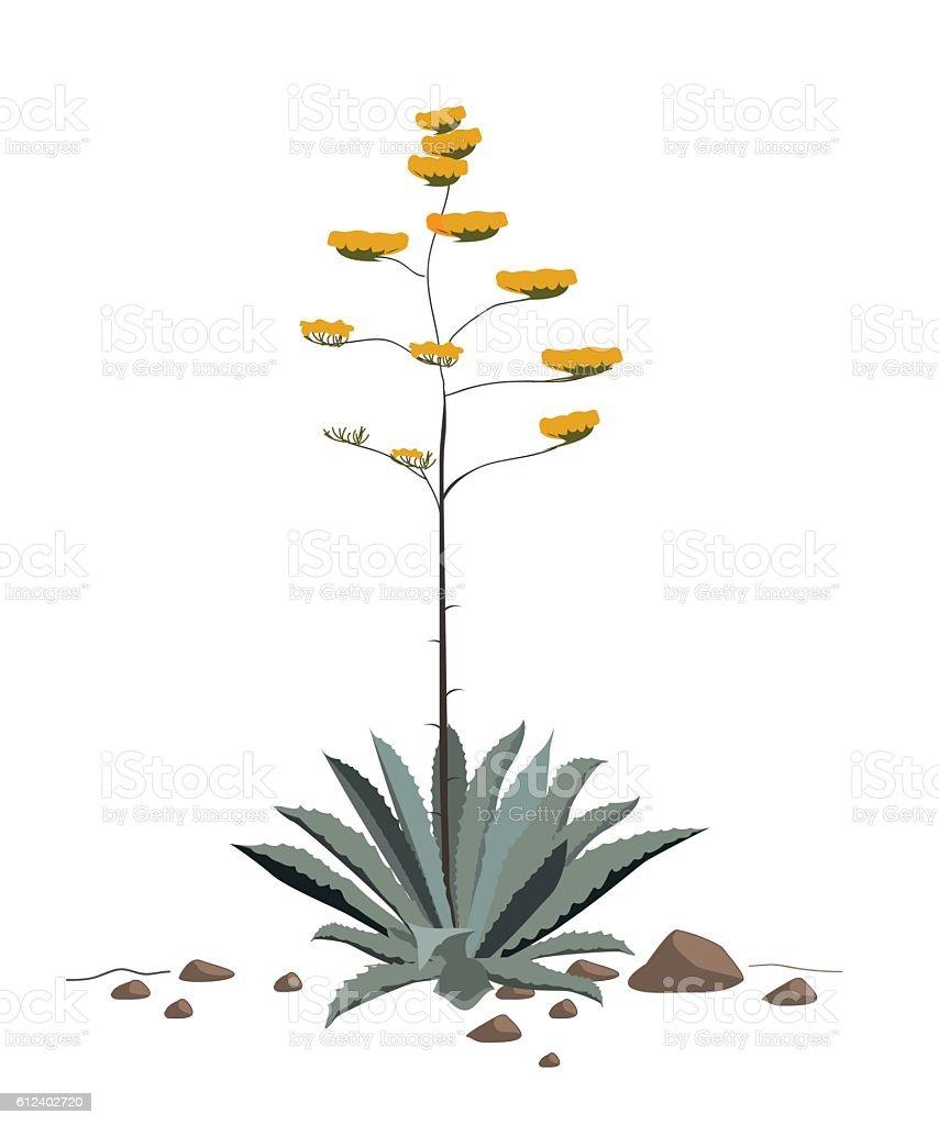 Flowers of the american Agave plant - ilustración de arte vectorial