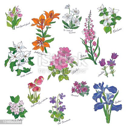 Flowers of the Canadian Provinces and Territories. Vector illustration.